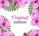 粉色热带花卉背景