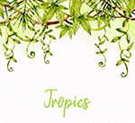 绿色热带树枝藤蔓