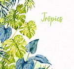 手绘热带龟背竹叶