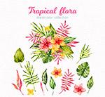 水彩绘美丽热带花束