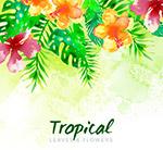 美丽热带花卉