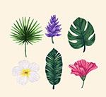 彩绘热带花朵和树叶