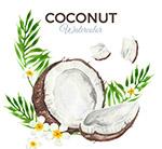 椰子和�u蛋花矢量