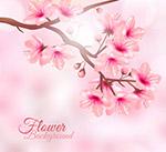 阳光下的粉色花枝