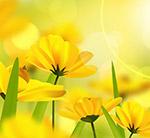 阳光下的黄色花卉