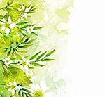 绿色树叶白色花卉