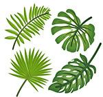 绿色热带植物叶子