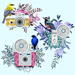 花鸟装饰照相机