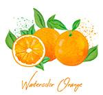 彩�L新�r橙子