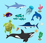 彩色海洋生物