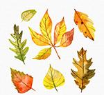 水彩绘秋季树叶