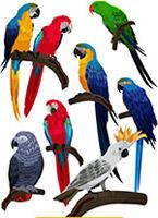 8款彩色鹦鹉