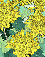 黄色盛开菊花