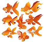 橙色金鱼设计