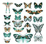 创意花纹蝴蝶