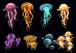 彩色透明水母