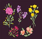 彩色盛开花卉