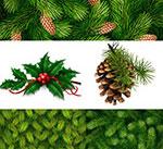 圣诞松果树枝