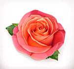 玫瑰花矢量