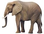 大象矢量素材
