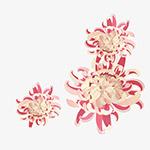 矢量手绘菊花