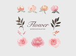 矢量水彩花卉插画