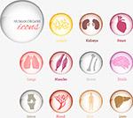矢量人物内脏图标