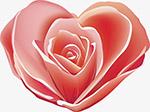 爱心粉色花瓣
