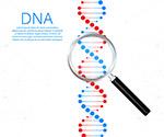 DNA链基因科技矢量