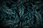 黑暗热带树叶背景