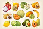 夏季热带水果插画