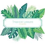 热带植物框架