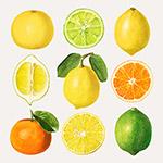 手绘水果柑橘矢量