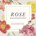玫瑰花卉背景
