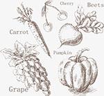 手绘秋季水果蔬菜