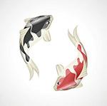 锦鲤鱼插图矢量