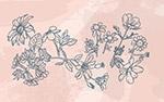 线描花卉矢量