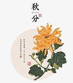 秋分中国风菊花