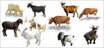 牛羊牲畜矢量