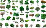 自然景观植物