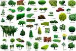 清新花圃树木