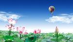荷塘自然风景