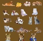 猫狗老虎图片