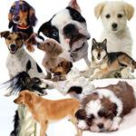 宠物狗狗图片