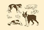 宠物狗剪影