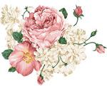 工笔画花朵插画