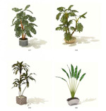 三维植物模型