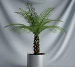 盆栽植物模型