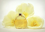 黄色香水百合