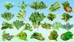 各类蔬菜图片